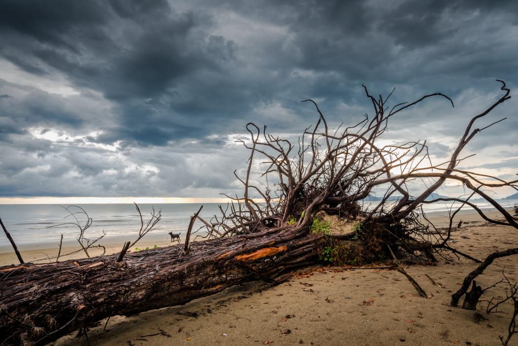 気候変動で慢性化した異常気象 ―― そのダメージとコストに対処するには ...